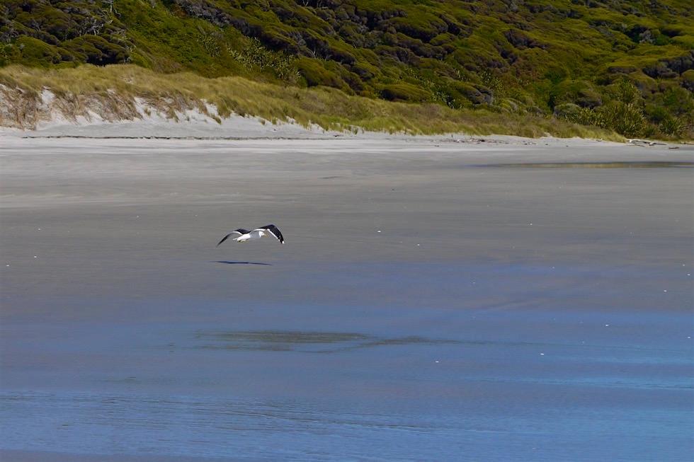 Strand & Spiegelungen - Wharariki Beach beim Cape Farewell - Neuseeland Südinsel