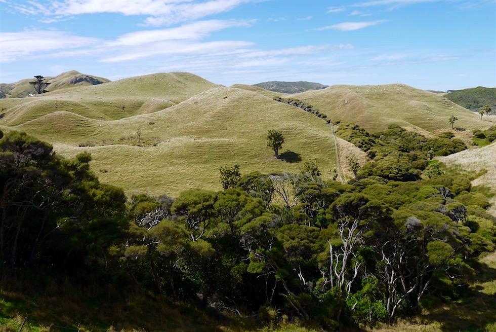 Weg zum Wharariki Beach - Neuseeland Südinsel