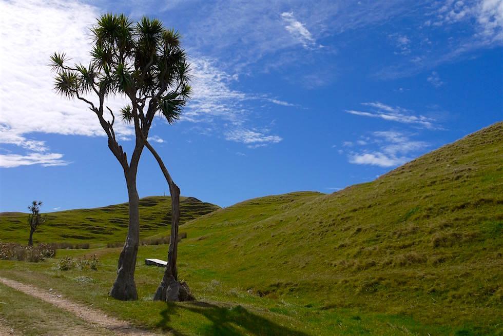 Kurzer Aufstieg zum Cape Farewell - Neuseeland