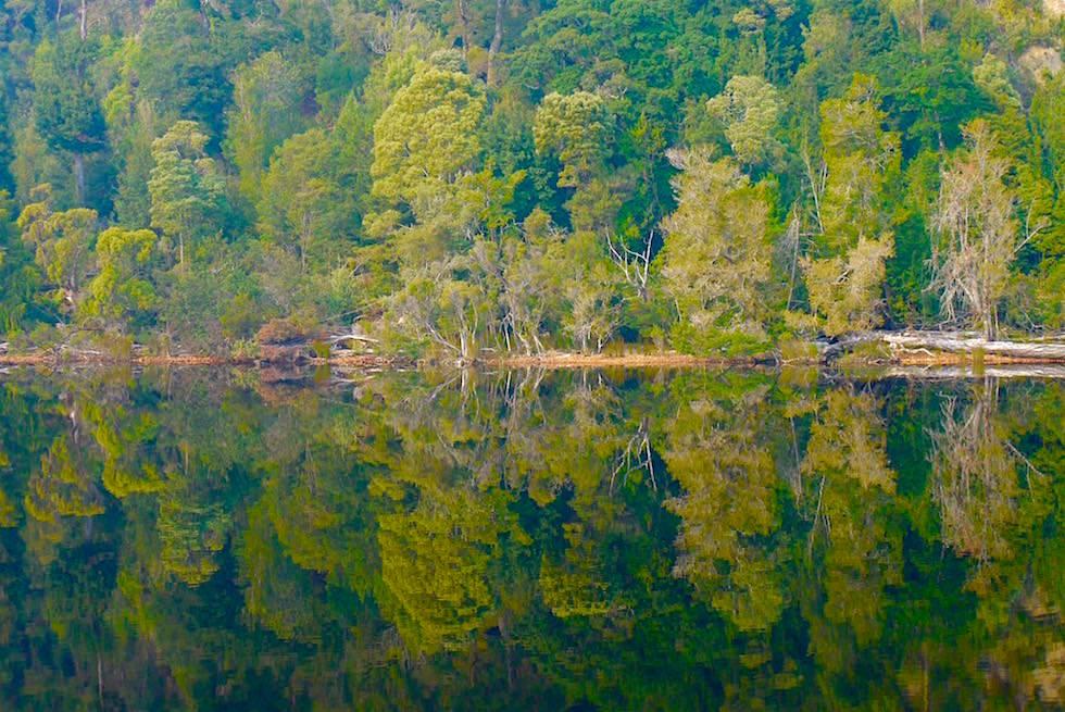 Gordon River Cruise - Wasserspiegelungen - Tasmania