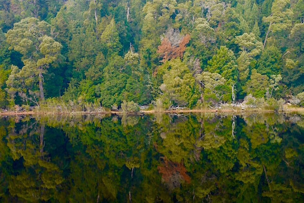 Ufer spiegelt sich im Gordon River - Tasmania