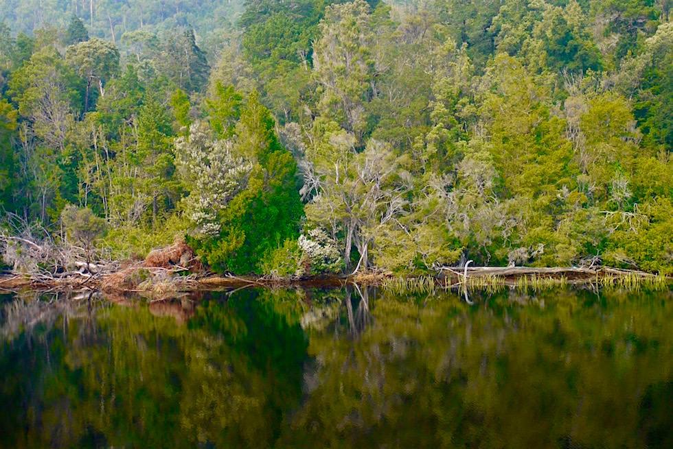 Wasserspiegelungen im Gordon River auf der Gordon River Cruise - Tasmanien