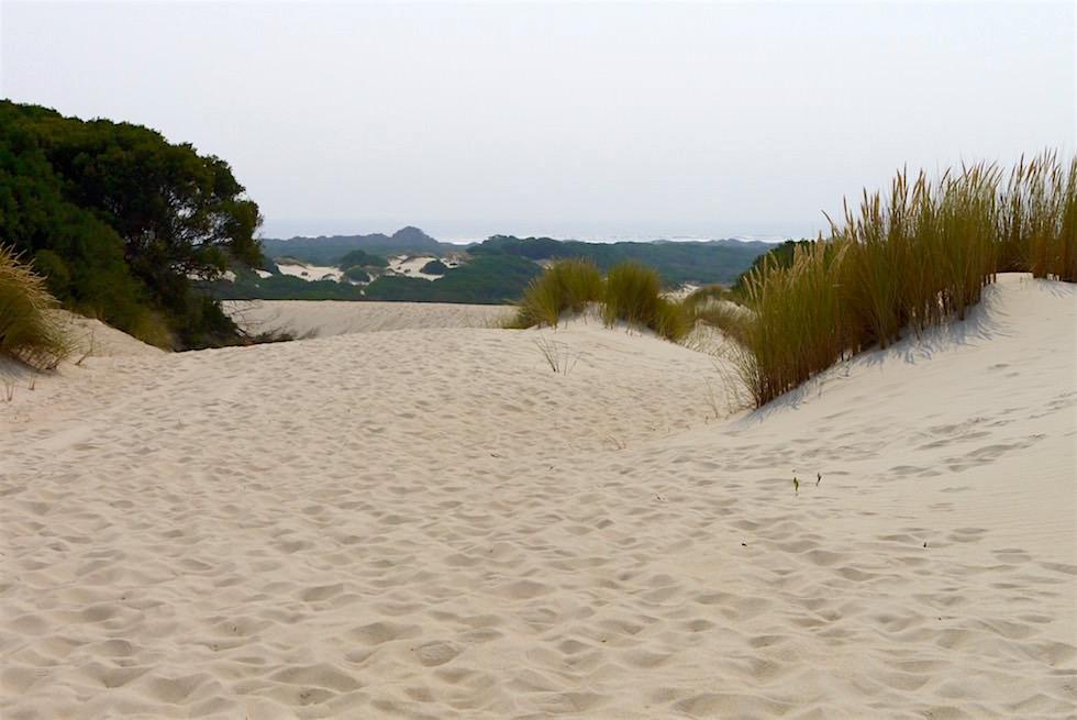 Henty Sand Dunes sind die größten Sanddünen Tasmaniens bei Strahan an der Westküste