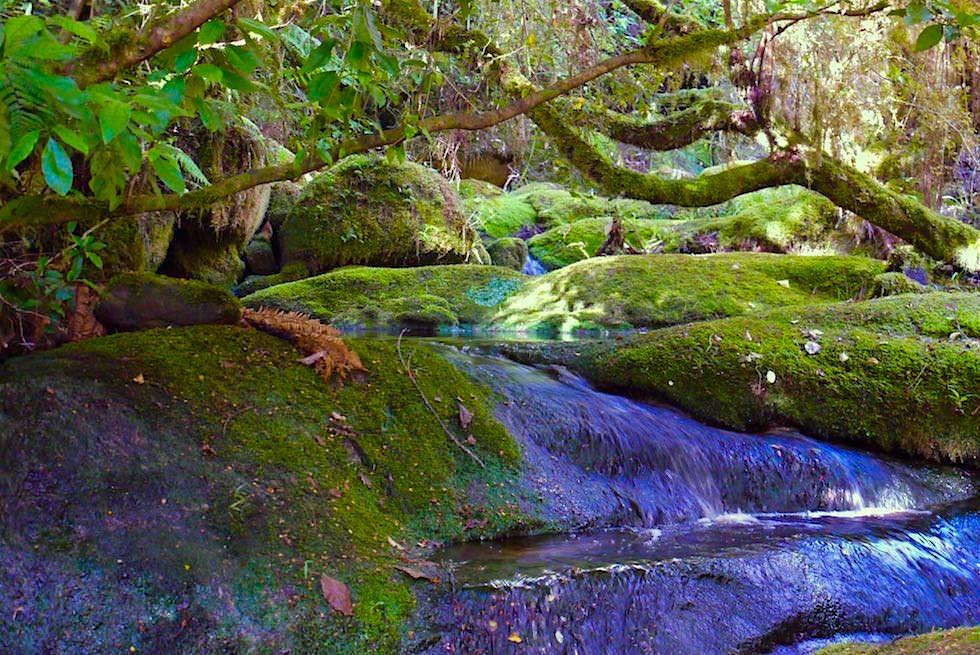 Bachlauf am Oparara River auf dem Weg zur Oparara Arch - Neuseeland Südinsel bei Karamea