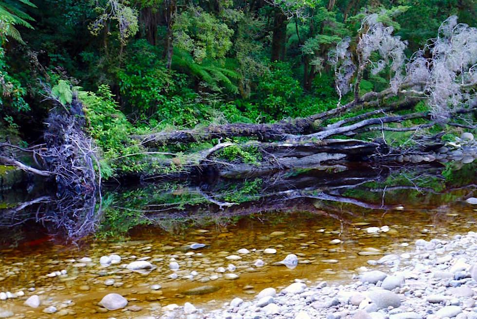 Spiegelungen im Oparara River auf dem Weg zur Oparara Arch - Neuseeland Südinsel Nordwestküste