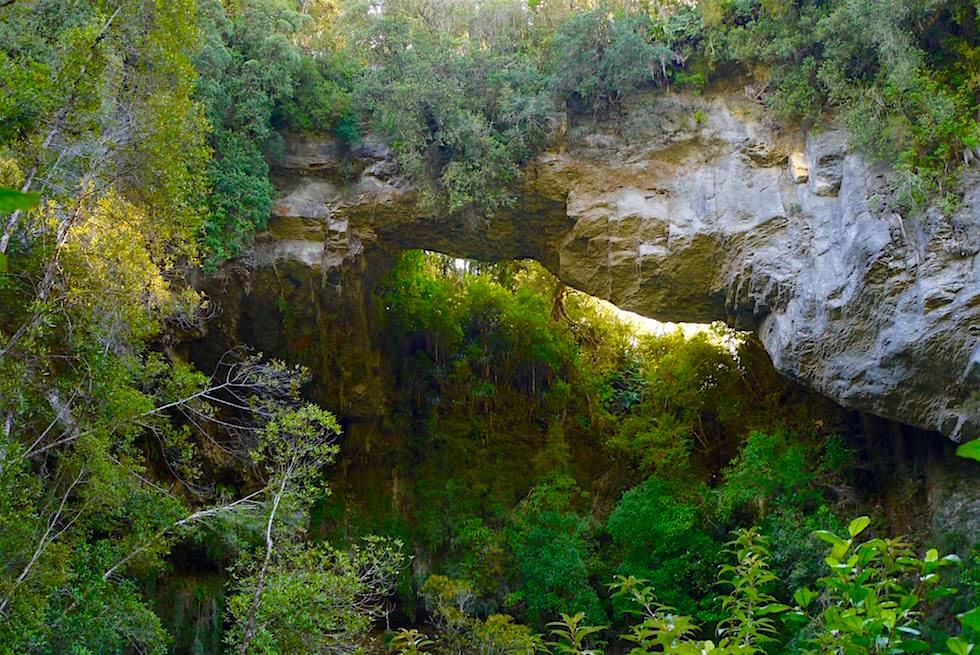 Steinbogen der Oparara Arch im Oparara Basin - Südinsel Neuseeland