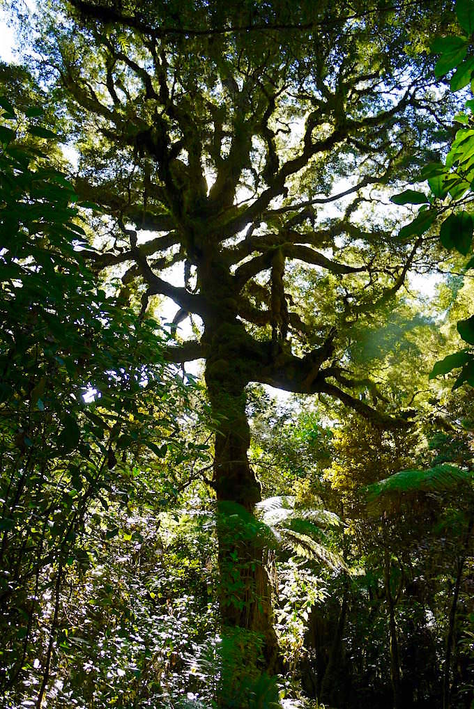 Waldwanderung - Moria Cave & Moria Gate Arch - Neuseeland Südinsel