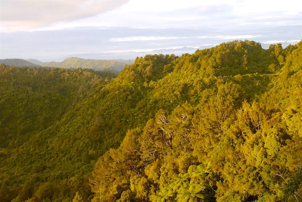 Kahurangi National Park - zwischen Westport und Karamea - Neuseeland Südinsel