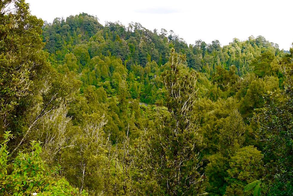 Whangamomona Saddle: unendliche Schattierungen von Grün - Forgotten World Highway - Neuseeland Nordinsel