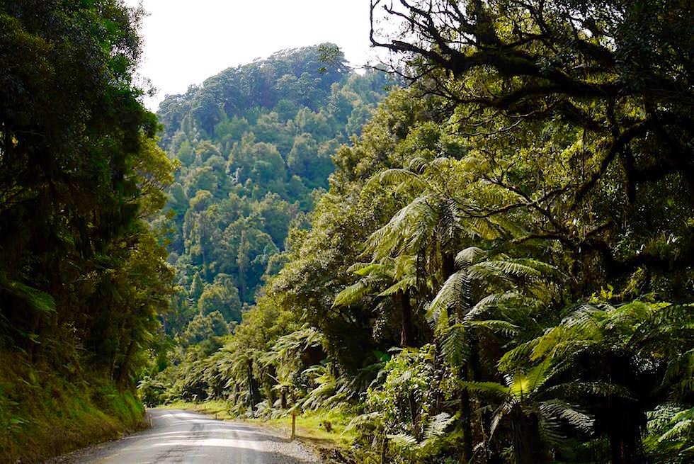 Ursprünglicher Regenwald der Tangarakau Gorge - Forgotten World Highway - Neuseeland Nordinsel