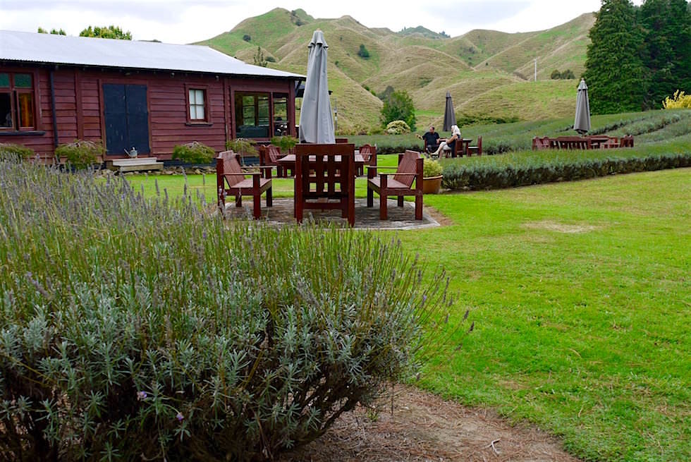 Lauren's Lavender Farm - Forgotten World Highway - Neuseeland Nordinsel