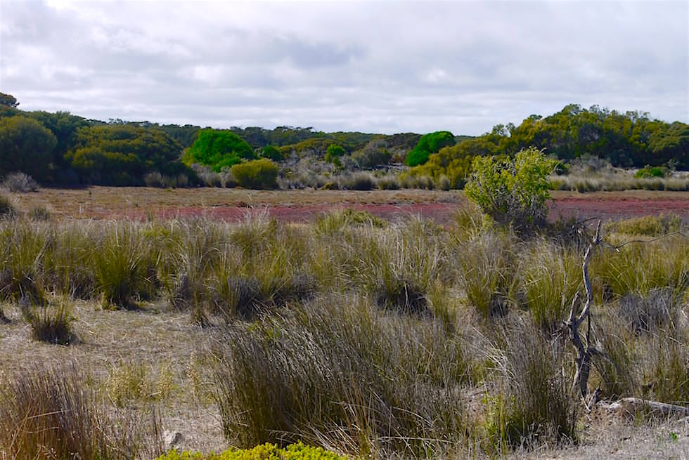 Vegetation zum Beginn des Coorong Loop Ways - South Australia