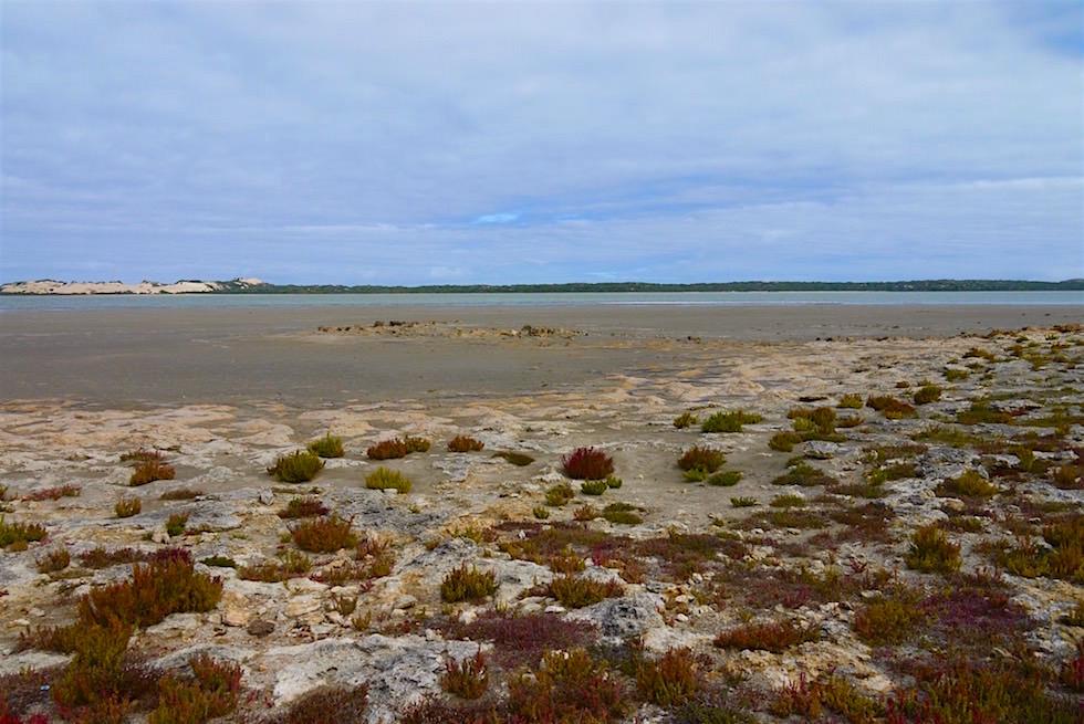 Große, salzhaltige Lagune - Coorong National Park - South Australia