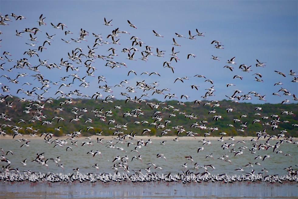 Vogelspektakel, tausende Vögel an der Lagune des Coorong National Park - South Australia