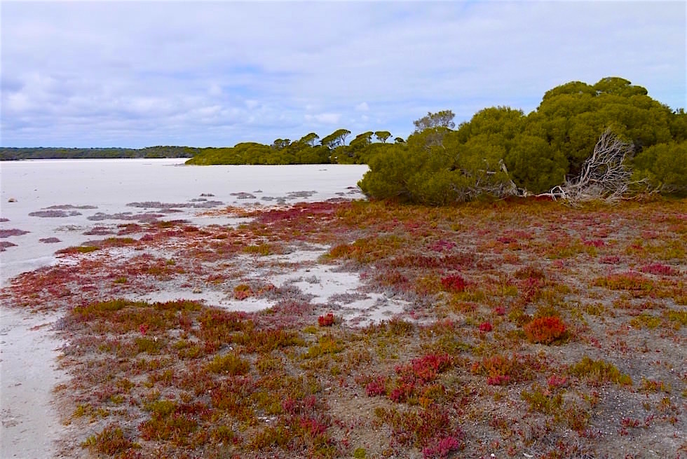 Ufer des Lakes Nature am Coorong Loop Way - Coorong National Park - South Australia
