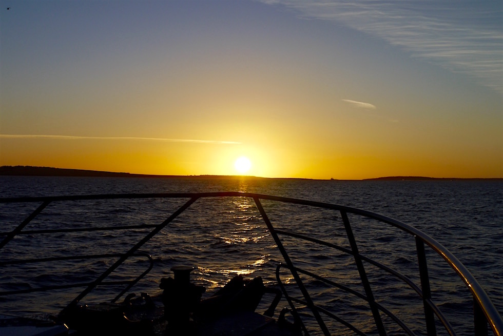 Tauchen mit Weißen Haien - Port Lincoln Harbour - South Australia