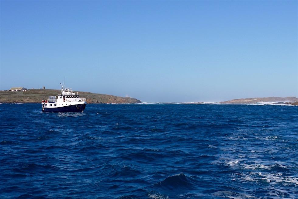 Neptun Islands - Tauchen mit Weißen Haien - South Australia