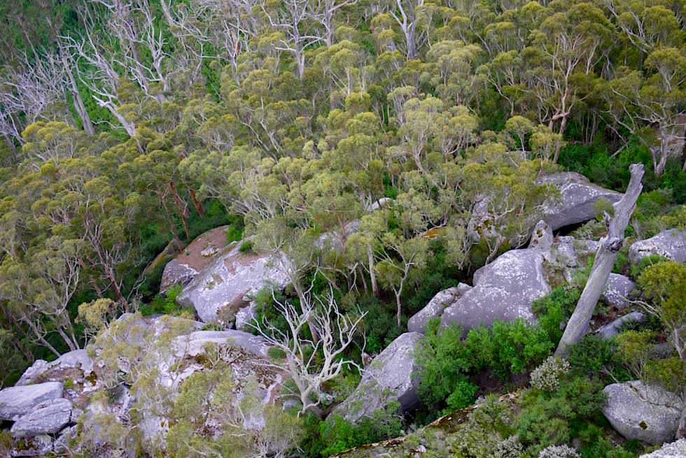 Wälder & Felsen unterhalb des Castle Rock Summit - Porongurup National Park - Western Australia