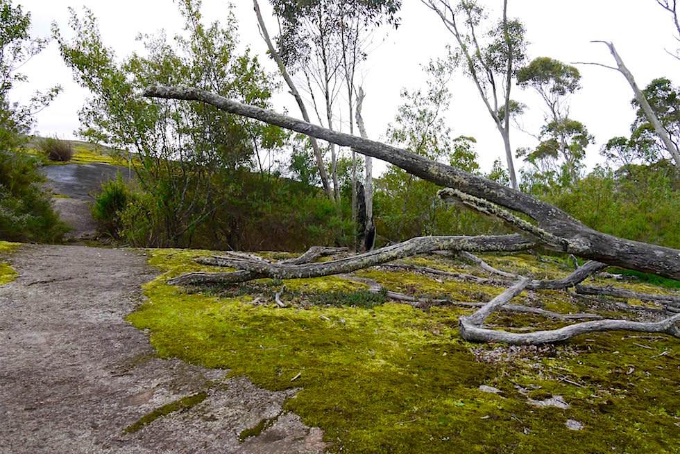 Granitfelsen nach dem Waldweg - Nancy Peak Walk - Porongurup National Park - Western Australia