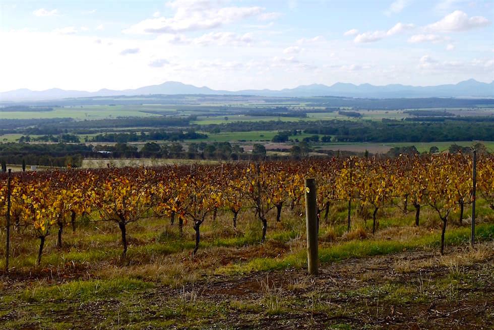 Weinberge und Stirling Range - Porongurup Tourist Drive - Western Australia