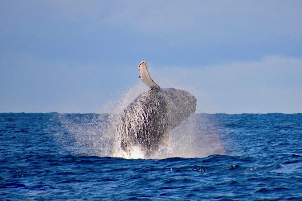 Buckelwale beobachten - Flinders Bay - Augusta - Western Australia