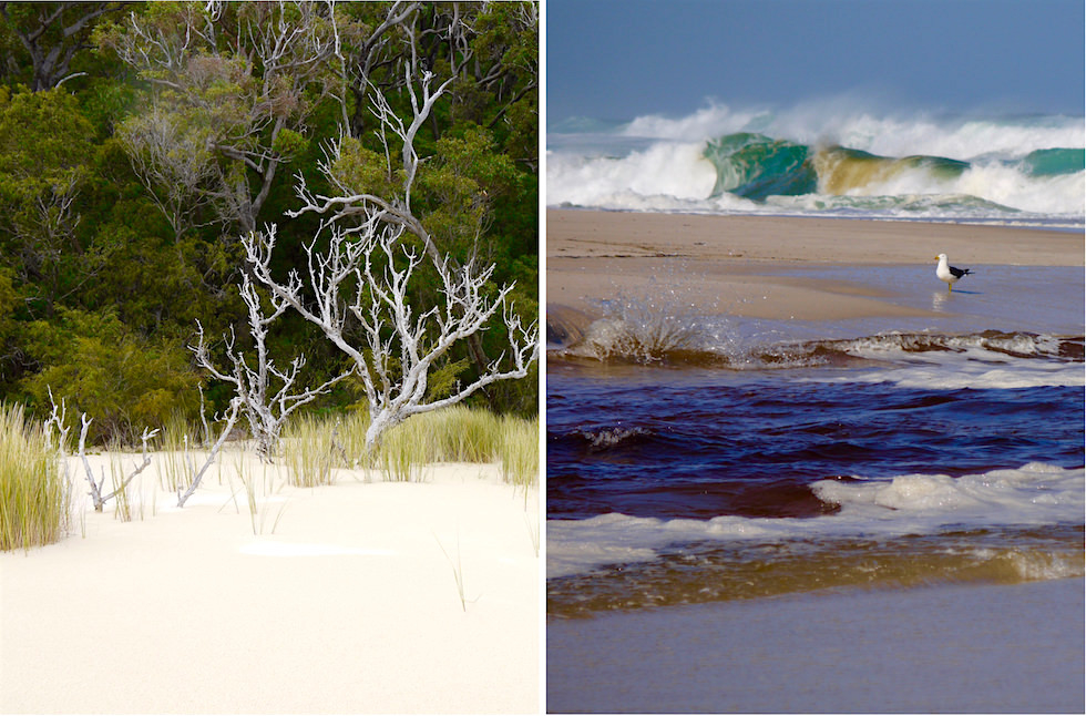 Beach & Forest Eco Tour Adventure - Pemberton - Western Australia