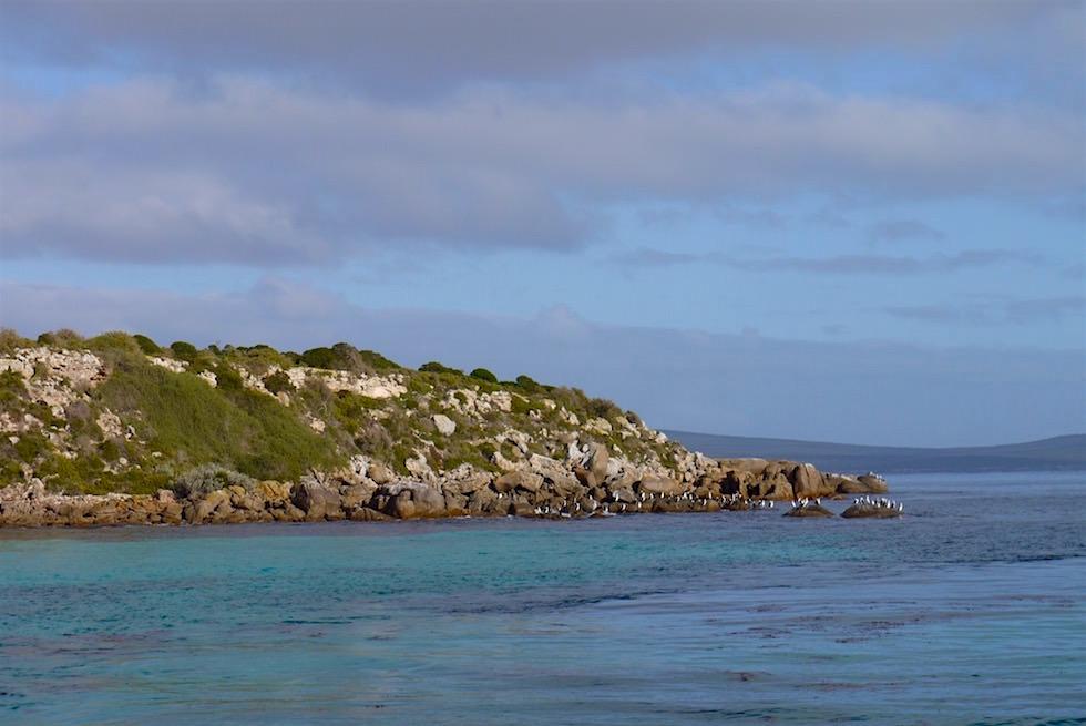 "Seal Cove ""Swim with Sea Lions"" - Eyre Peninsula - South Australia"