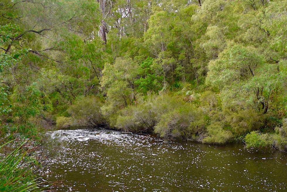 Warrren River - Vom Warren National Park zu den Yeagarup Sanddünen - Pemberton - Western Australia