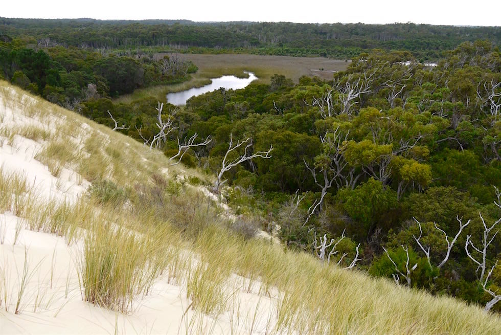 Pemberton Discovery Eco Tours - Yeagarup Sanddünen eroben Wald - D'Entrecasteaux NP - Western Australien
