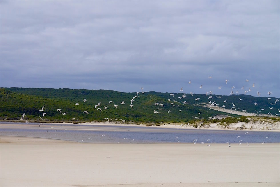 Yeagarup Beach Where Warren River meets Southern Ocean - Western Australia