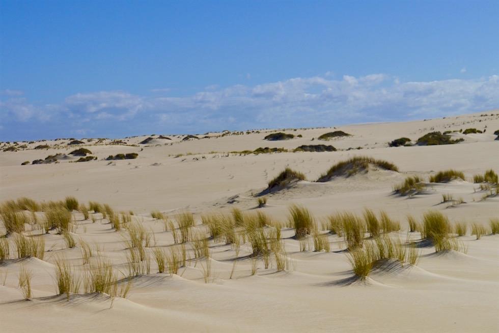 Unendlich erscheinende Weite der Yeagarup Sanddünen - Beach & Forest Eco Adventure - Western Australia