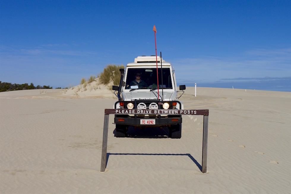 Lustig - Yeagarup Sanddünen - Pemberton - Western Australia