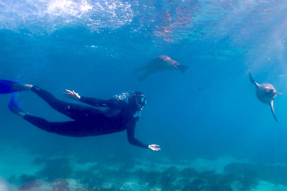 Schnorchel mit Australischen Seelöwen - Eyre Peninsula - Southern Australia