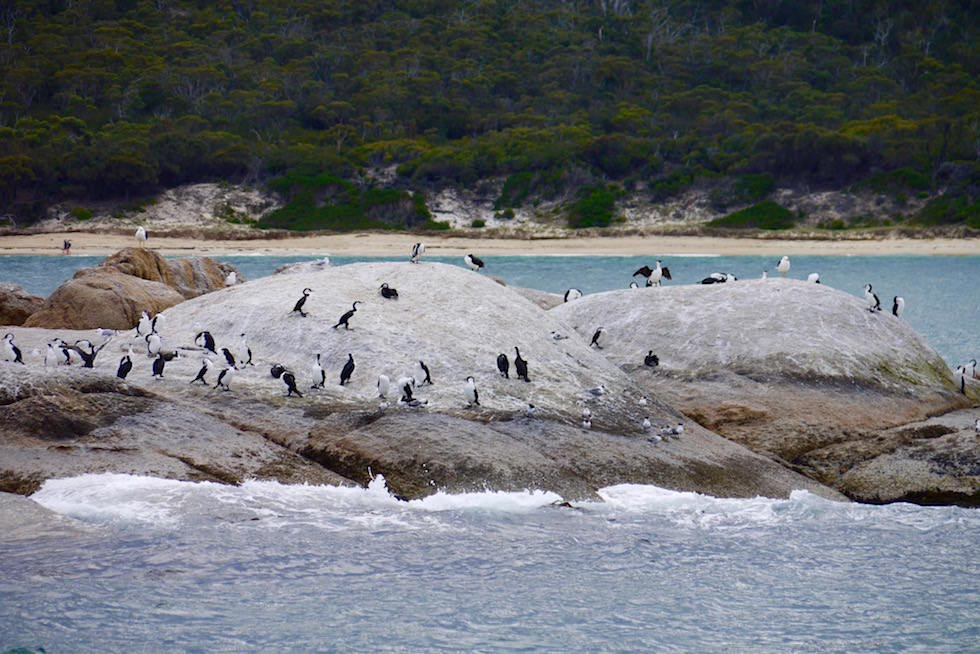 Kormorane Hazard Beach - Wineglass Bay Cruise - Tasmania