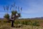 Rawnsley Park – Bunyeroo & Brachina Gorges – Eine 4WD Flinders Ranges Zeitreise!