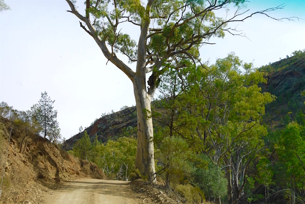 Bunyeroo Gorge - Ikara-Flinders Ranges 4WD Tour - South Australia