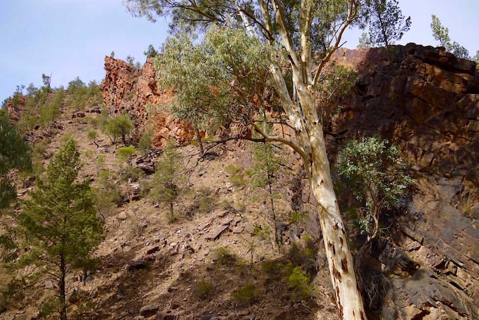Ausblick - Bunyeroo Gorge - Ikara-Flinders Ranges - South Australia