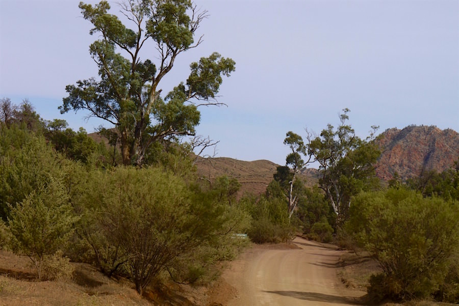 Bunyeroo Gorge Road - Ikara-Flinders Ranges - South Australia