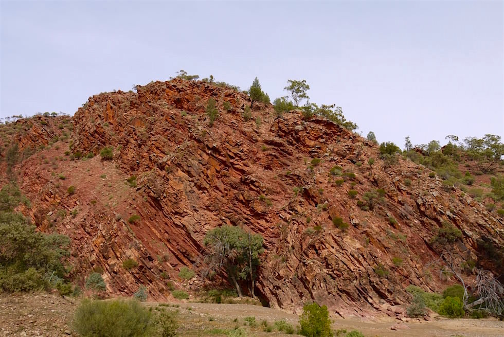 Gesteinerhebung - Brachina Gorge - Flinders Ranges - South Australia