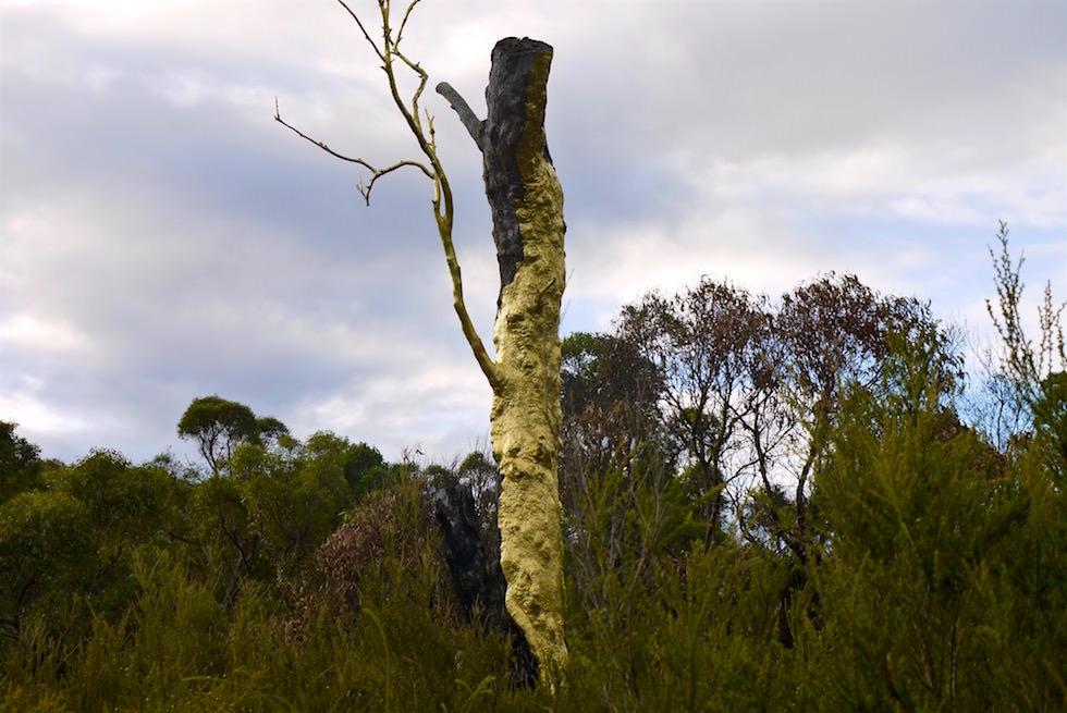 Die Understory Sculptures sind ein Northcliffe Highlight und definitiv einen Besuch wert - Northcliffe Visitor Centre - Western Australia