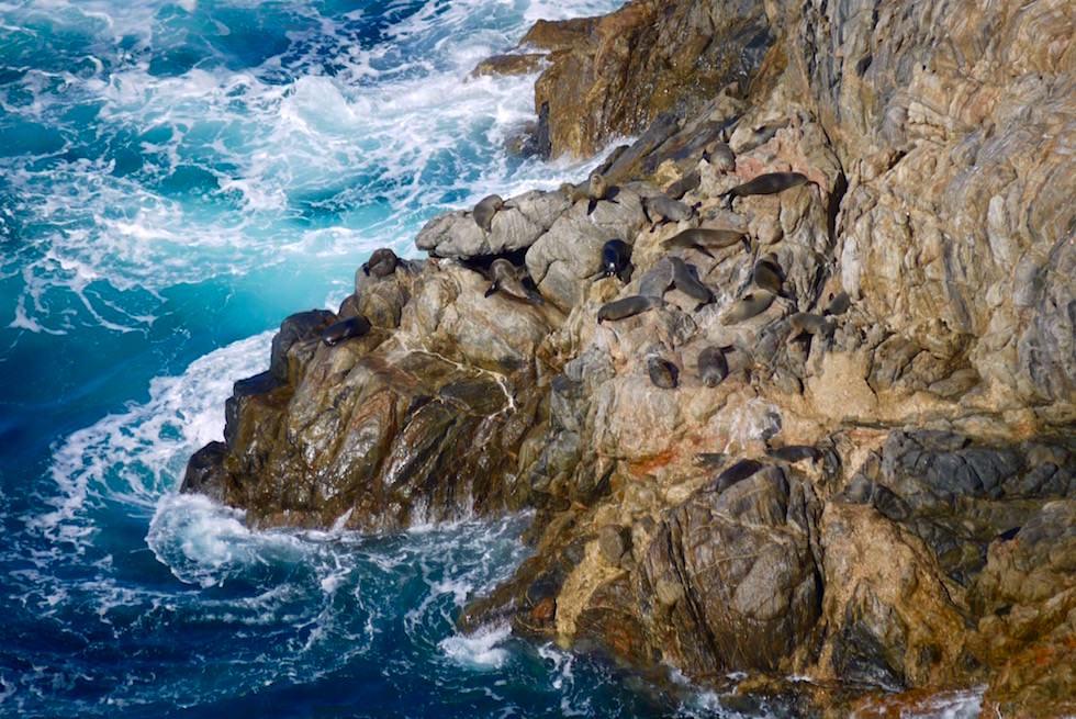 Cape Wiles & Seebären Kolonie - Whalers Way bei Port Lincoln - South Australia