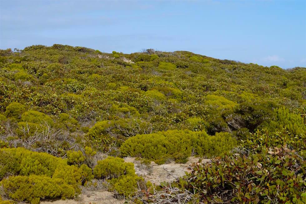 Buschlandschaft - Whalers Way - South Australia