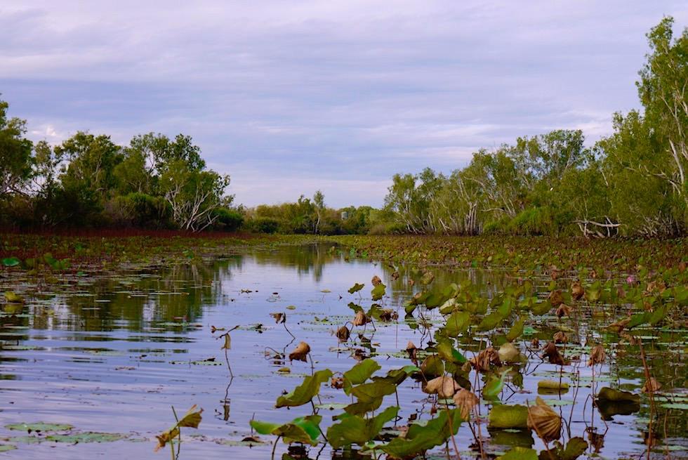 Corroboree Billabong - Wasserwege im Nachmittagslicht - Northern Territory