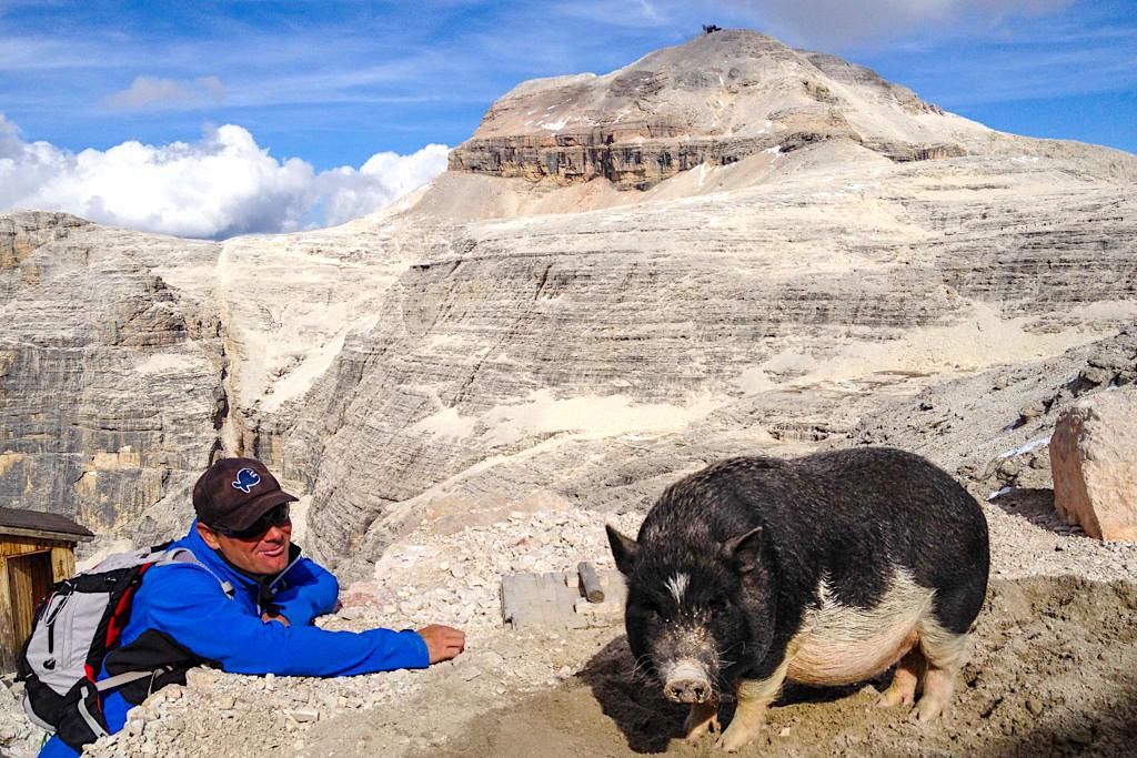 Rifugio Forcella Pordoi - Bergsau als Hüttenmaskottchen: definitiv eine Wanderattraktion auf dem Weg zum Piz Boe - Sella, Dolomiten