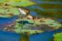 Corroboree Billabong – Atemberaubendes & außergewöhnliches Natur- und Tierparadies