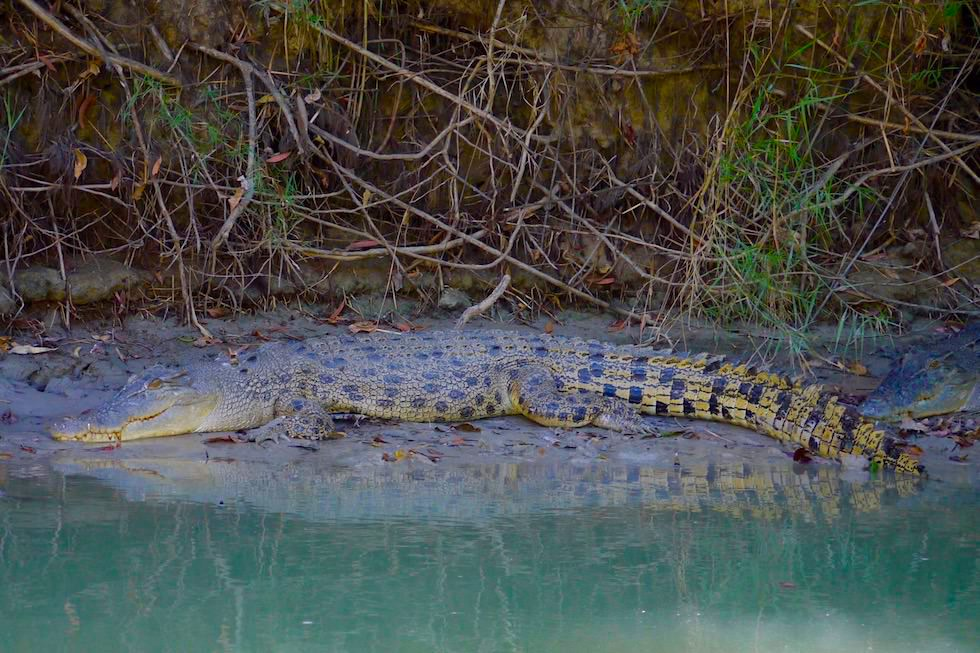 Junges Leistenkrokodil - Guluyambi Cultural Cruise - Northern Territory