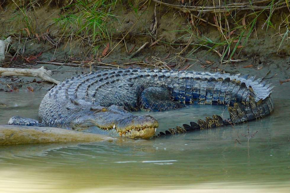 Krokodil liegt im Kreis - Guluyambi Boot Tour - Northern Territory