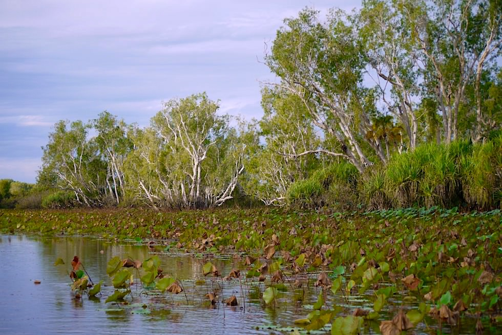 Nachmittag Stimmung - Corroboree Billabong - Northern Territory