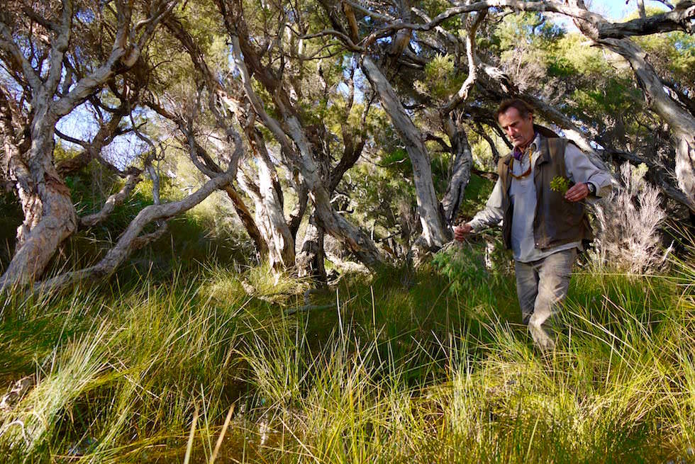 Wilde Pflanzen - Bushtucker Cave & Canoe Tour - Western Australia