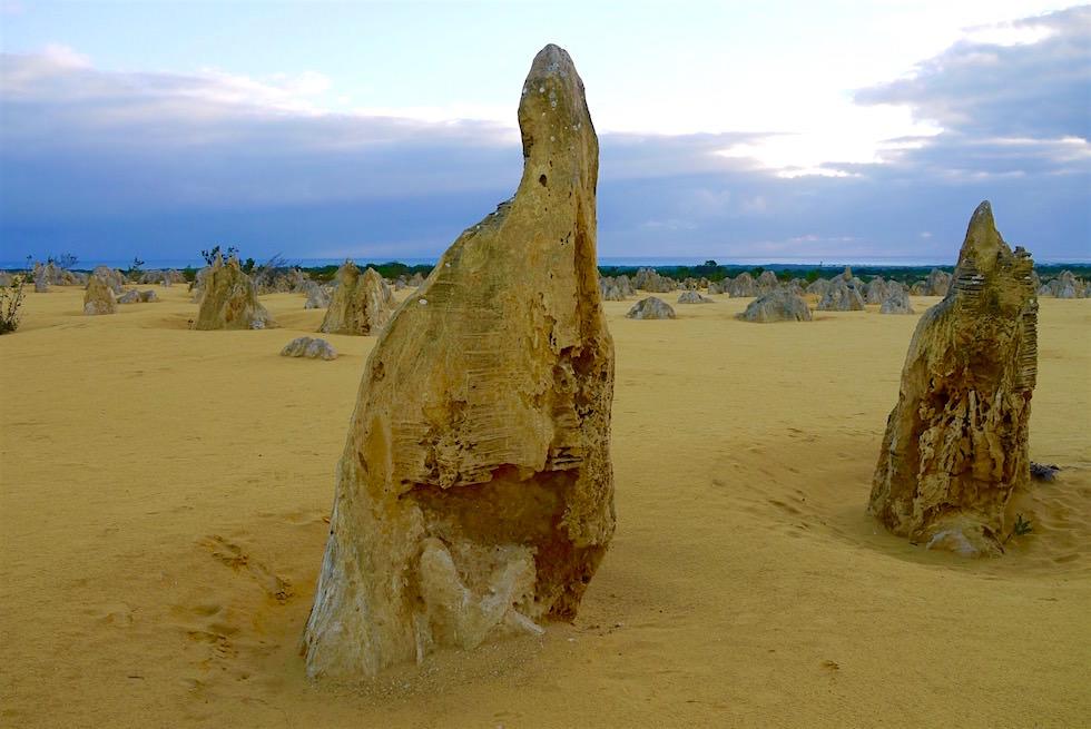 Versteinerter Wald - Theorie Entstehung Pinnacles Desert - Western Australia